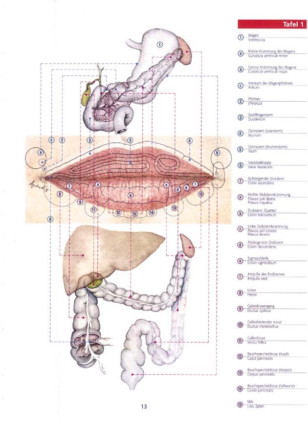 Neurodermitis ist heilbar! - Diagnose - Physiognomik